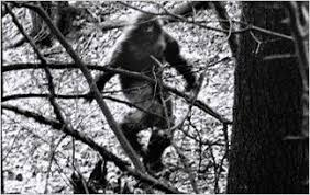 4/23 Poll of the day: Is Bigfoot Real?
