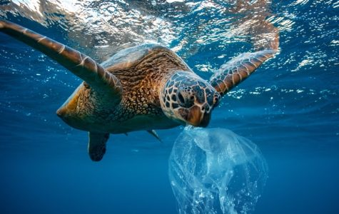Seven Simple Steps to Save the Turtles